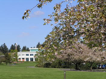 Blooming cherry tree and Cannell Library