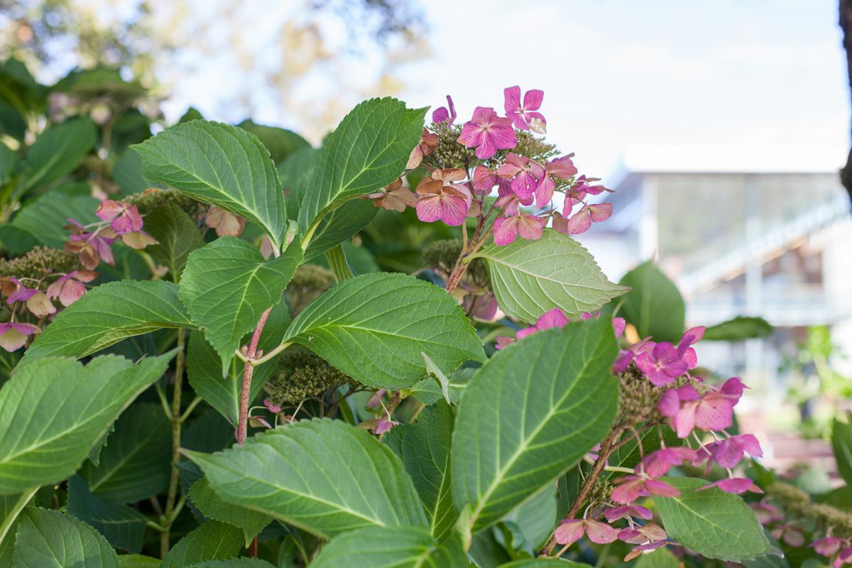 Decorative image: flowering shrub on the Clark College campus